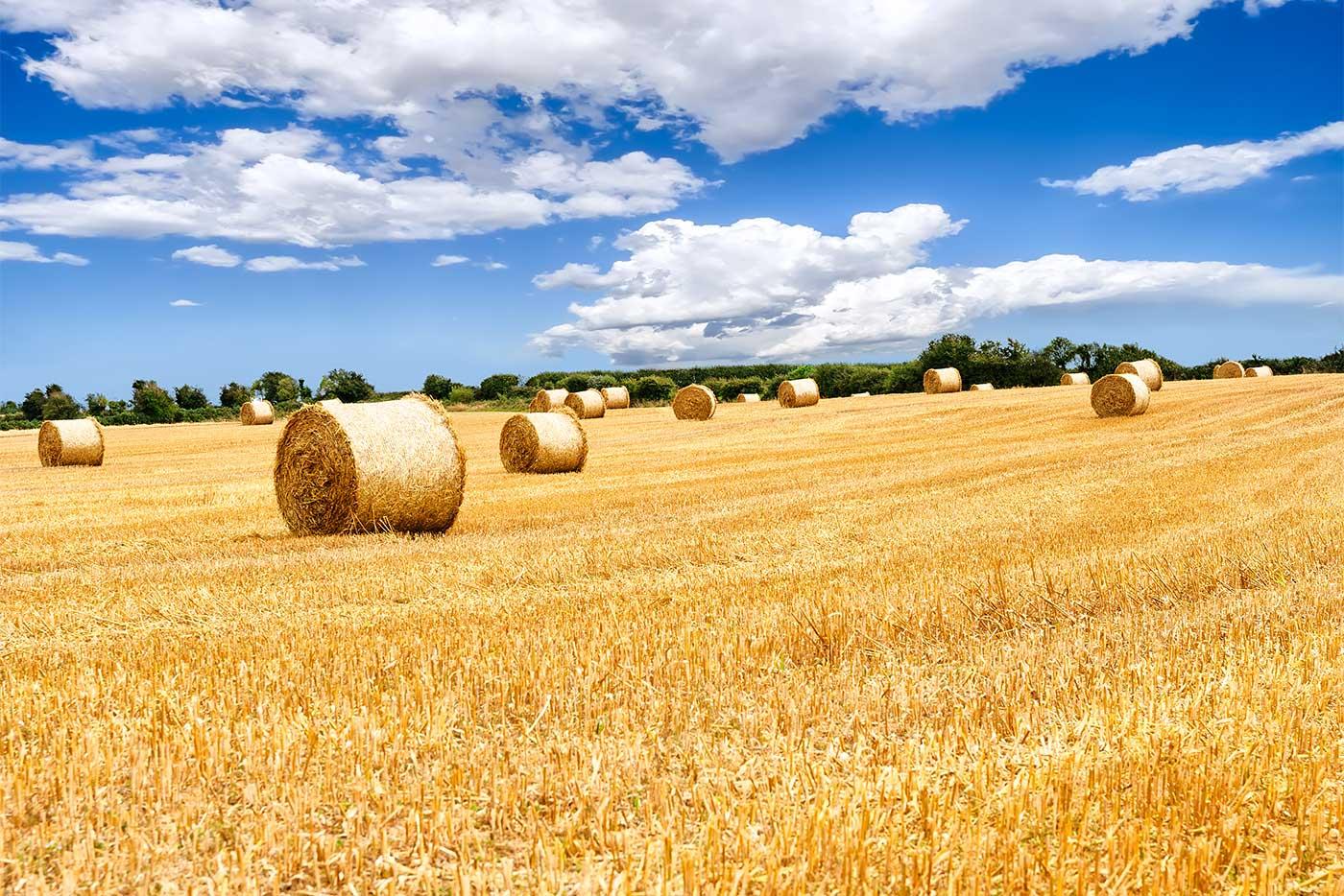 partnersuche landwirtschaft Er sucht sie ♥ - finde deine traumfrau mit der kostenlosen partnersuche auf meinestadtde single-frauen kennenlernen.